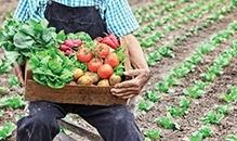 A conexão do produtor com a gastronomia