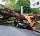 Quem paga pela queda das árvores?